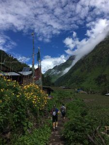 Nepal Lion Tours and Treks Pvt Ltd
